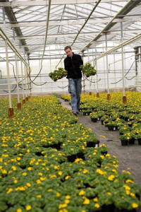 Greenhouse_Growers